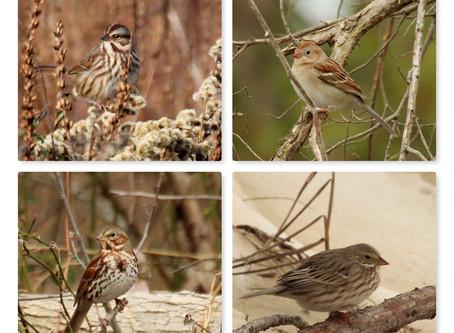 """Sparrows Simplified: Making Sense of LBJs"""