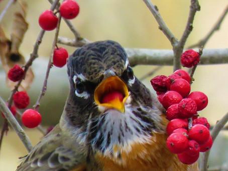 Invite the Birds with Native Plants via ZOOM February 14