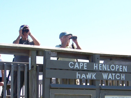 Hawk Watch 2020 @ Cape Henlopen State Park
