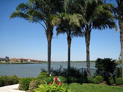 Palm tree fertilizing