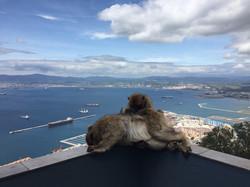 Обезьянки - символ Гибралтара