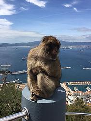 В Гибралтар из Испании. Макаки - символ Гибралтара