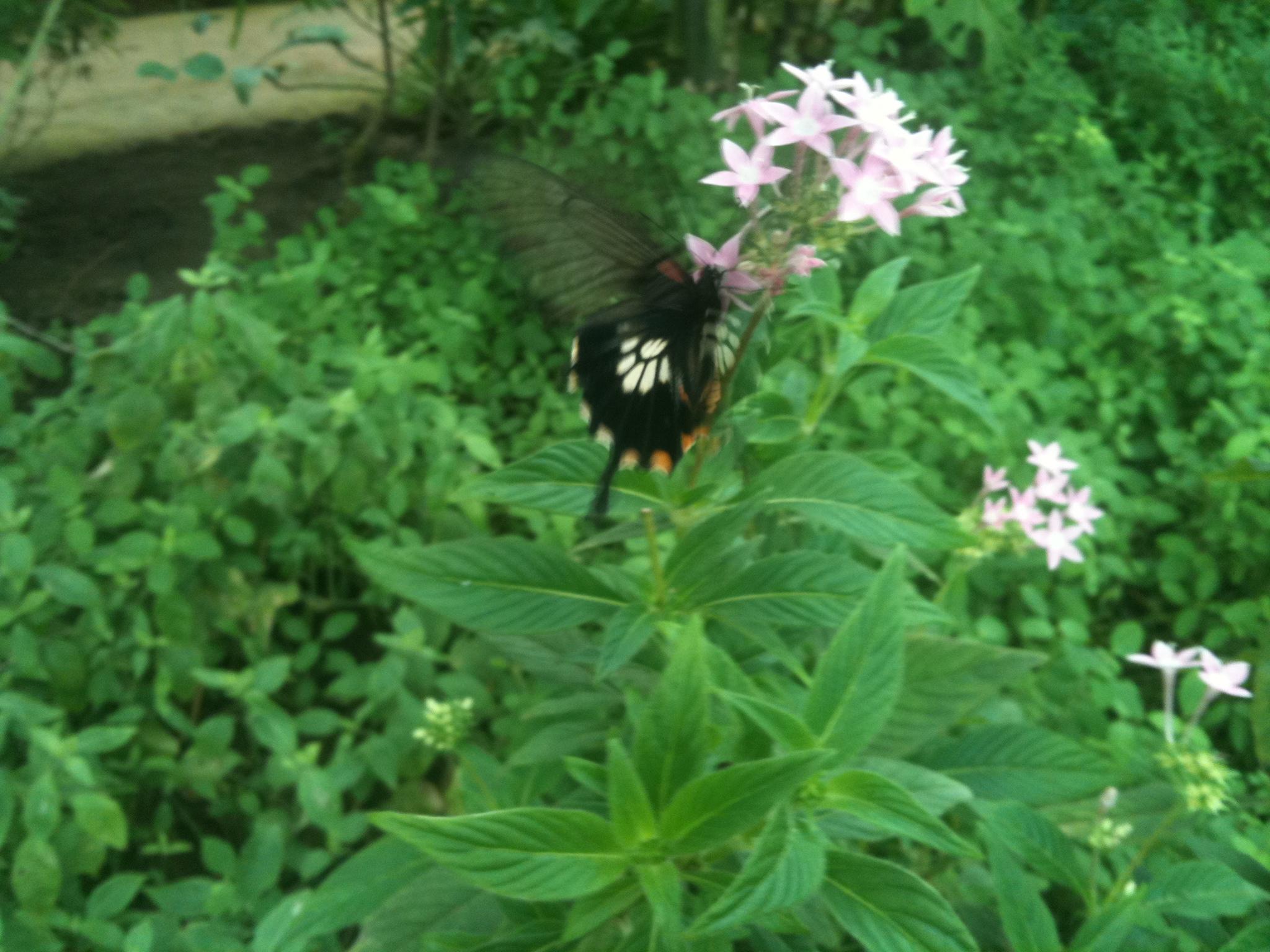 Парк бабочек в Бенальмадена