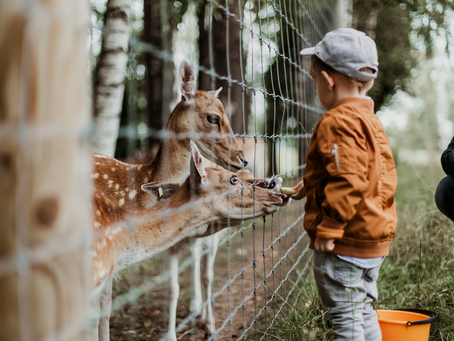 The Six Must Visit Zoos with Rare Animals