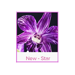 New- Star Lei.png