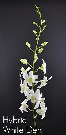 fc-hybrid-white-den.jpg