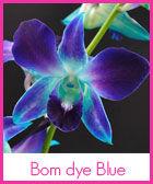 sonia-blue-r (1).jpg