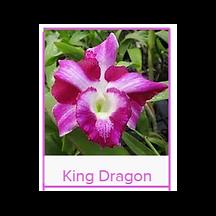 King Dragon Lei.png