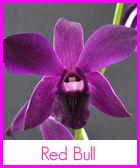 red-bull-n-r.jpg