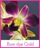 bom-gold-n-r.jpg