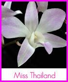 miss-thailand-r.jpg