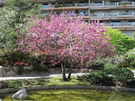5 mooiste kleine bomen en heesters voor in de tuin