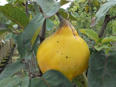 Klein fruit in de tuin