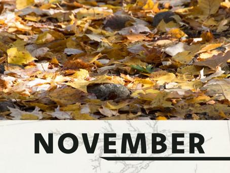 Een aantal tuin tips voor de maand November
