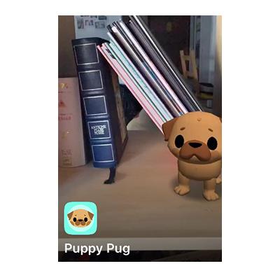 The Puppy pug