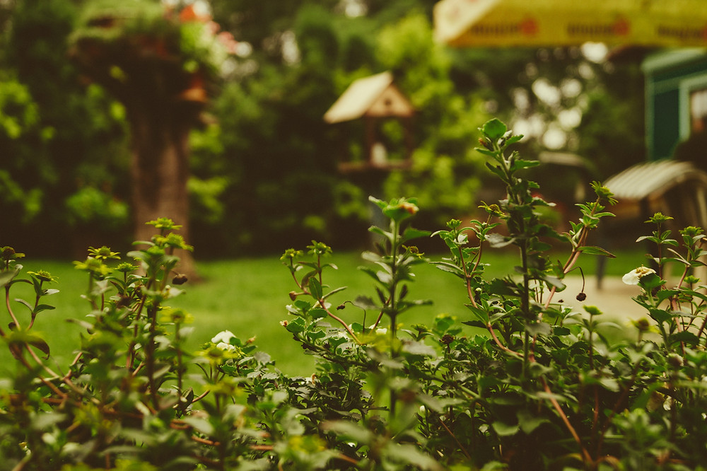 A lush and green backyard.