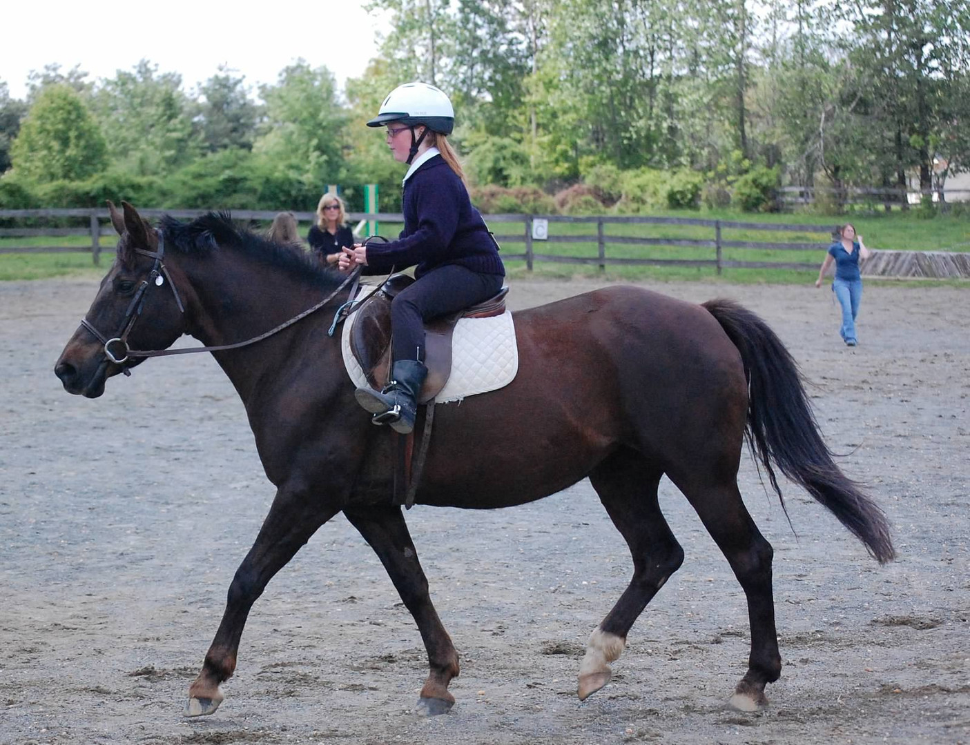 Schooling shows for all ages and levels