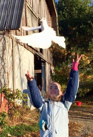 Pigeon Release