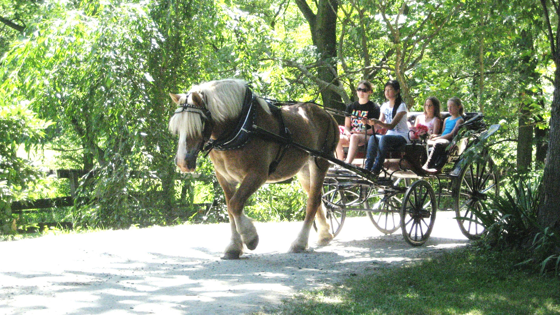 Learning to drive a carriage