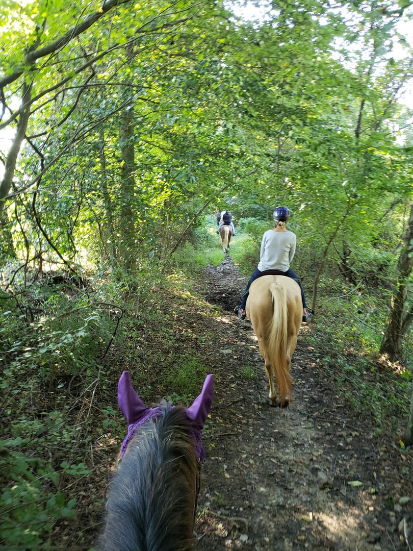 A peaceful private trail ride