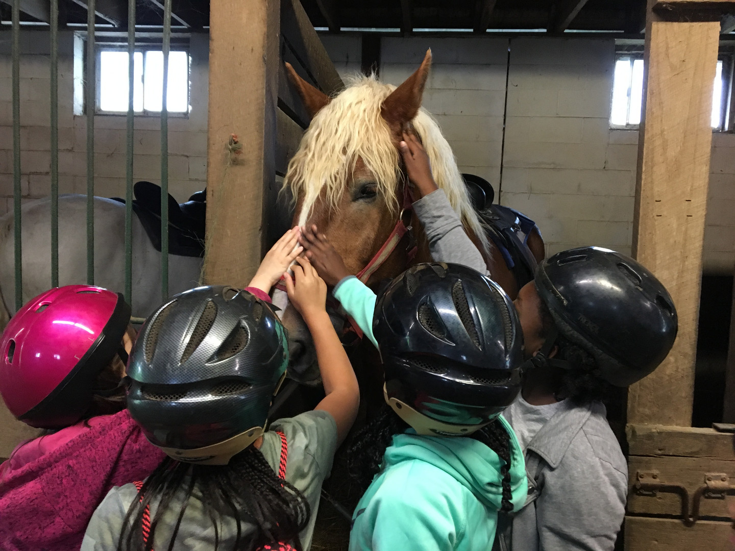 Girl Scouts meeting our horse Billy
