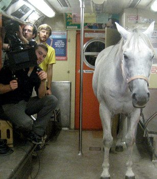 Our horse Smokey on a Subway Car