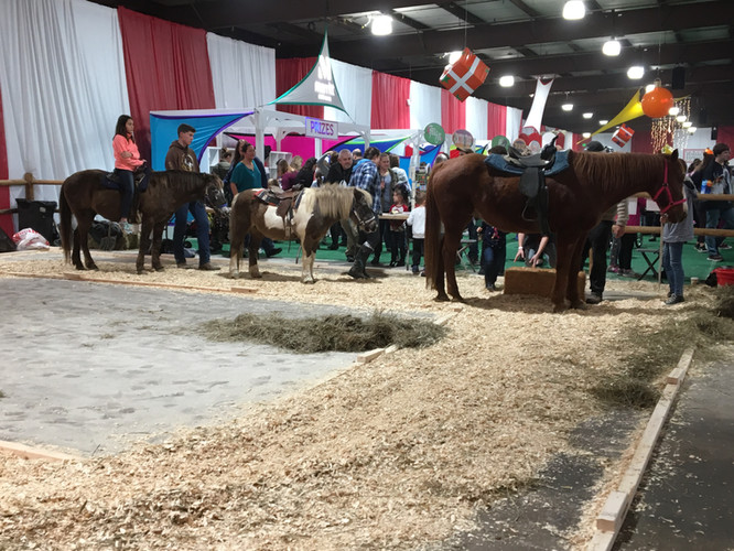 Pony Rides at Krieger - Kennedy Festival