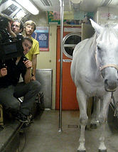 Horse on the subway