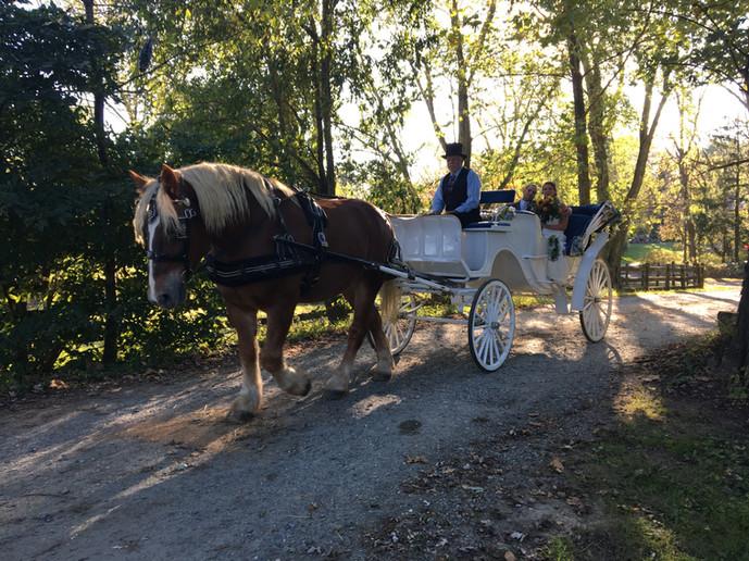 White carriage at Fairwinds Farm