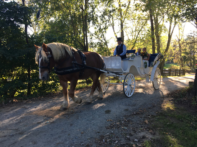 Our white carriage at Fairwinds Farm