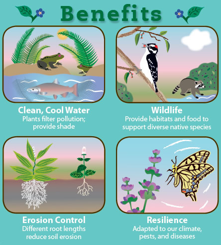 benefits of native plants