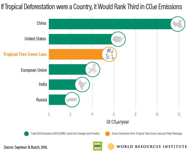 Deforestation carbon levels