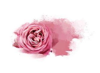 4-embyou-Alp-roses-336x246.jpeg