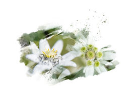 embyou-antioxidants-336x246.jpg