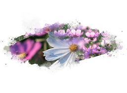 embyou-botanic-extract-336x246.jpg