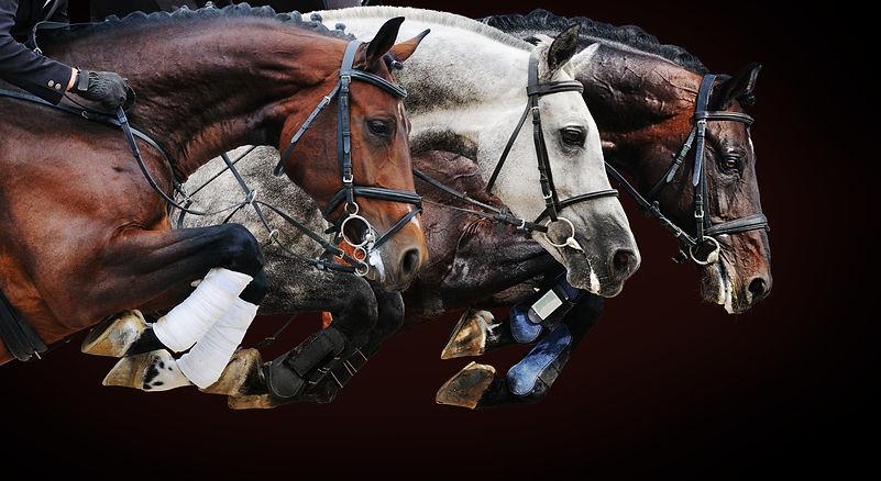 three-horse-race.jpg