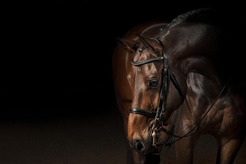 Horses_Black_background_485705.jpg