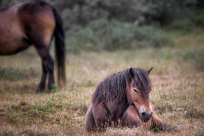 Resting-Horse.jpg