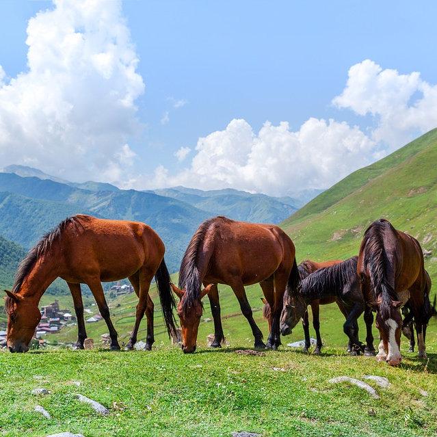 foal-3606745_960_720.jpg