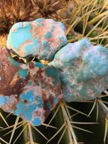 Aztec nuggets on cactus
