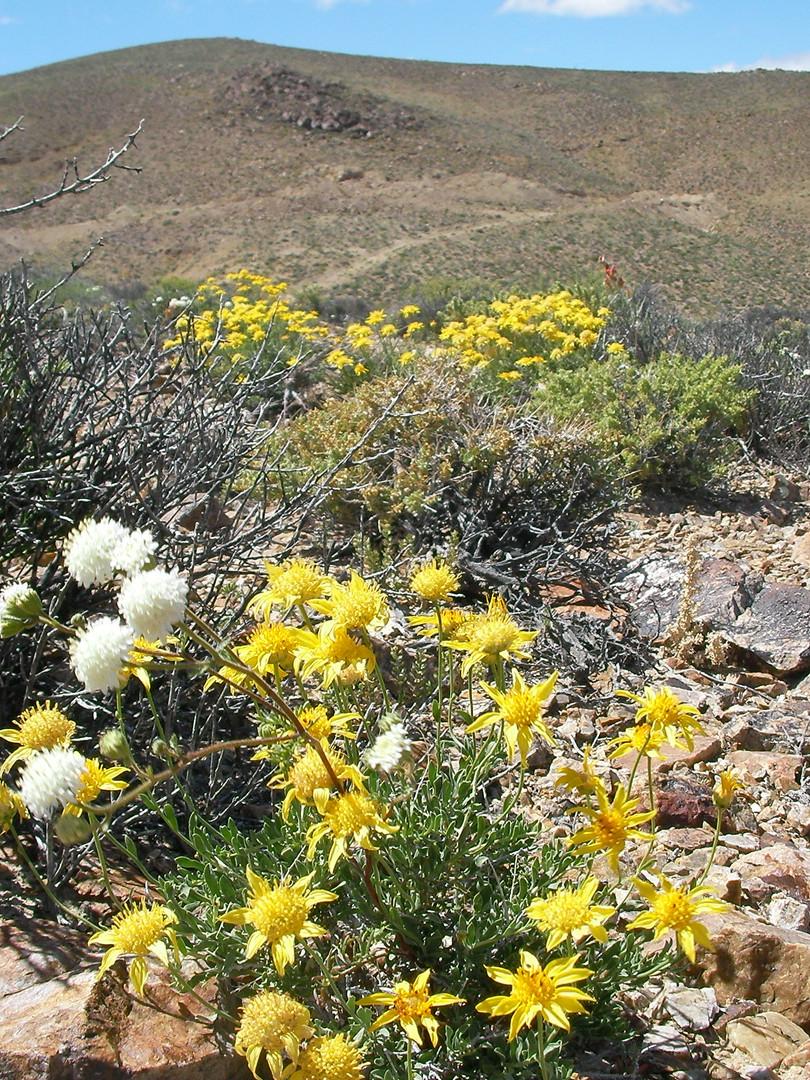Carmelita with desert flowers