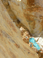Ajax blue vein in situ