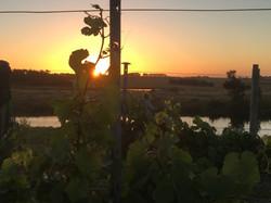 Harman Wines, Inverloch