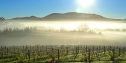 Warratah Hills Vineyard