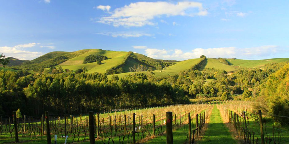 Warratah Hills Vineyard