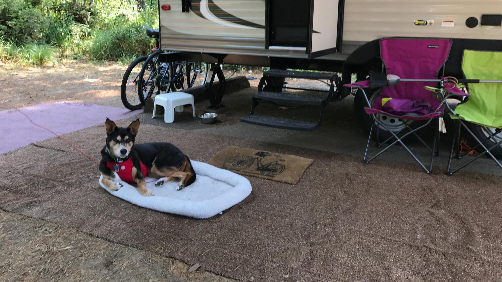 Emma the Incredible Camping Dog