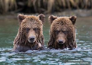 Eagle Bear 4.jpg