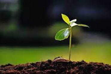 growing seed.jpg