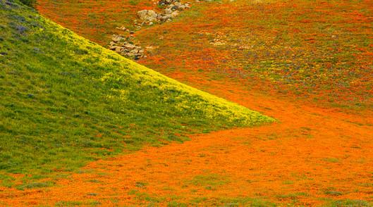 Tejon Ranch 8.jpg