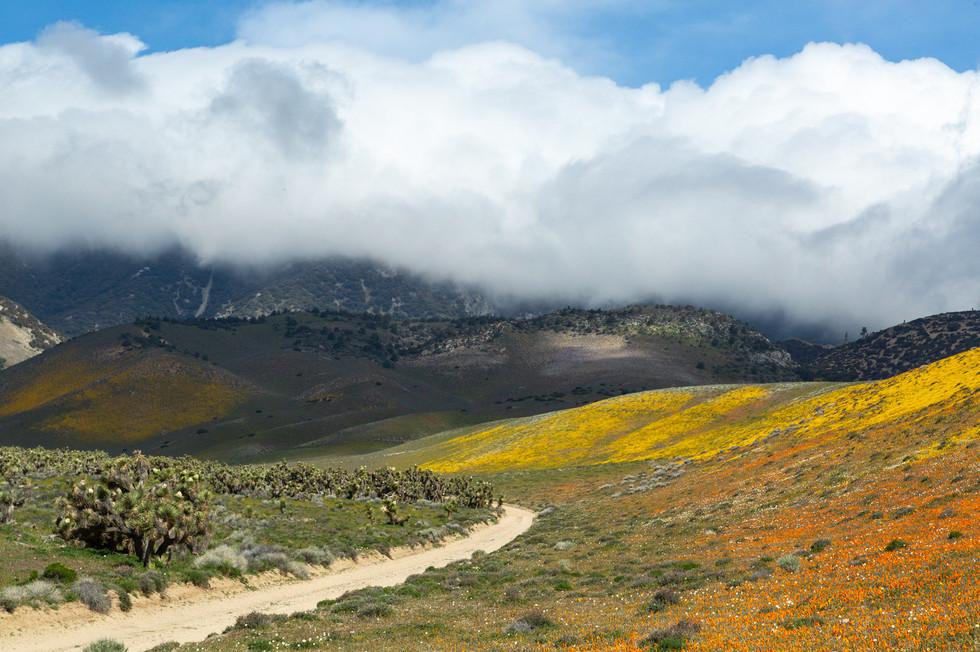Tejon Ranch 2.jpg